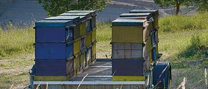 Schutz der Bienen und Stärkung lokaler Kooperationen