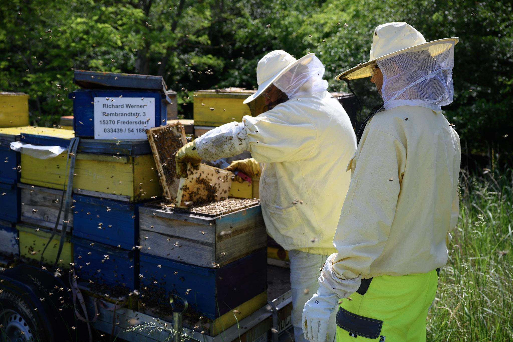 Hannah Fischer, Projektleiterin des Bienenprojekts bei CEMEX, überprüft mit Richard Werner die Bienenstöcke. (Foto: CEMEX Deutschland AG/Thomas Weber)